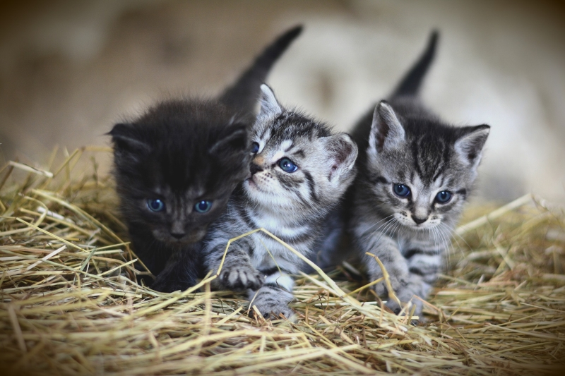 Look at the little kittens. How many can you see?
