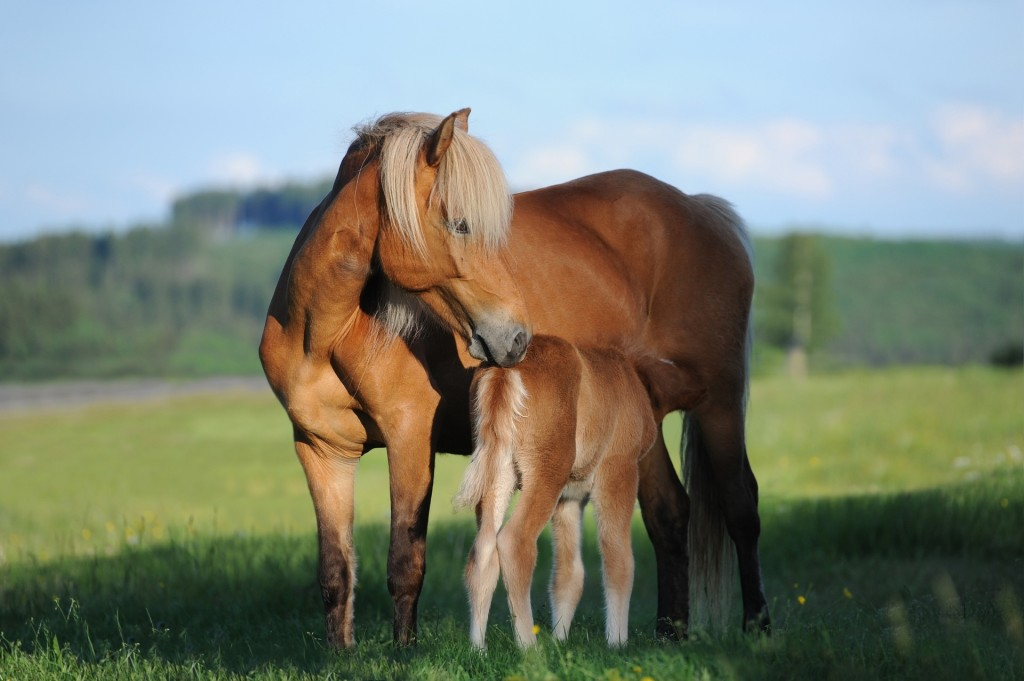 The foals mummy is called a Mare.