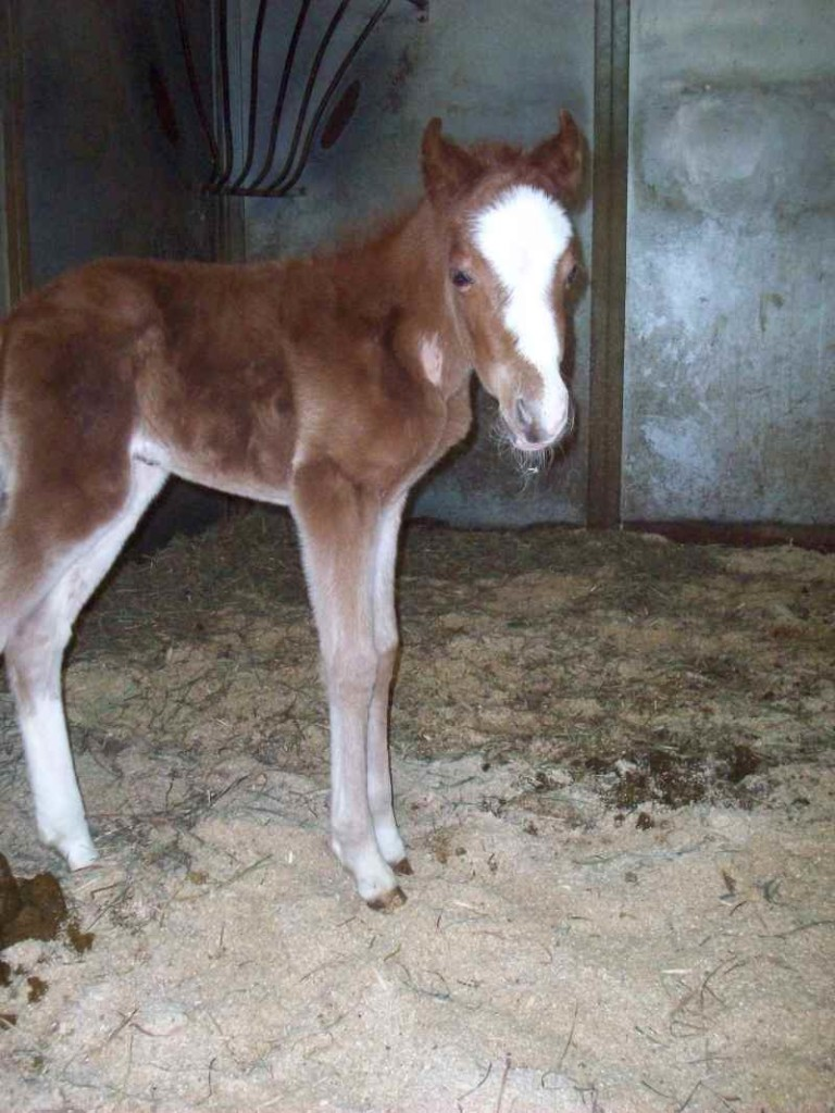The baby horse is called a foal. I wonder can you find it's mum?