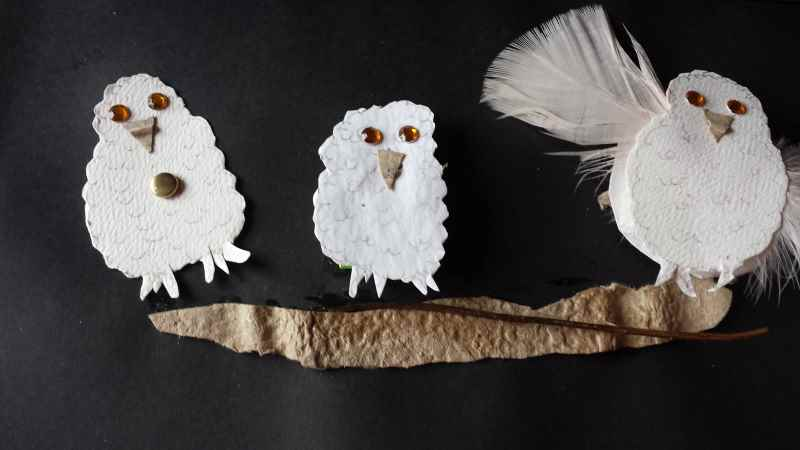 baby owlets 1